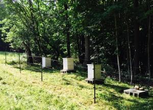Honeybee Winter Survival 2015