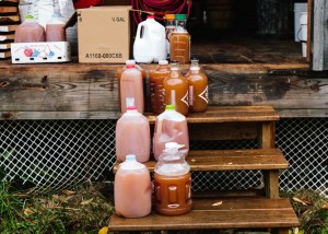 Jugs of Fresh Apple Cider to Take Home!