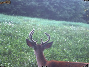 Antler Growth by August 21st