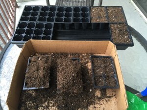 Filling the trays with potting soil