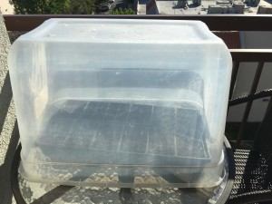 Mini greenhouse made from an upside down storage tub