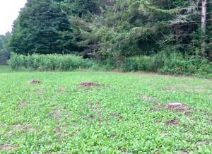Planting around the stumps!