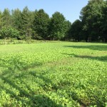 Fall Food Plots – Trying New Seed Mixes