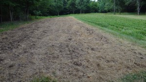 Deer Food Plot 2012 - Rape with Turnips and Radishes