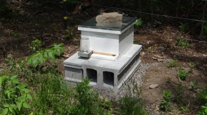 Newly Installed Honey Bee Hive