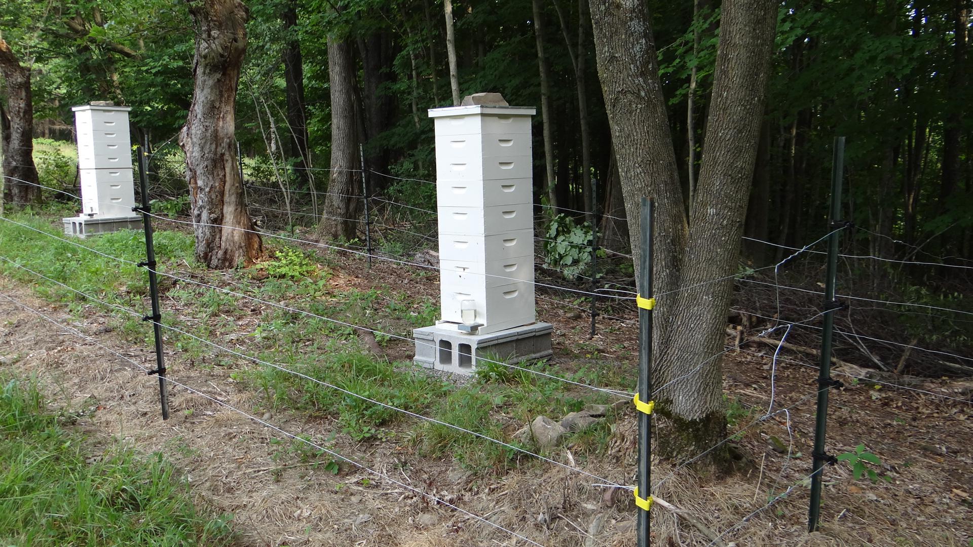 Honeybee Bear Fence