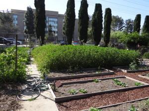 Community Garden Plot First Day