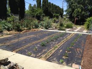 The Garden is Growing!