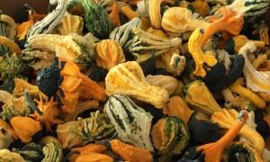 Gourds!