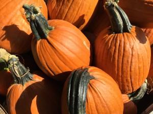 Big Stem Pumpkins!