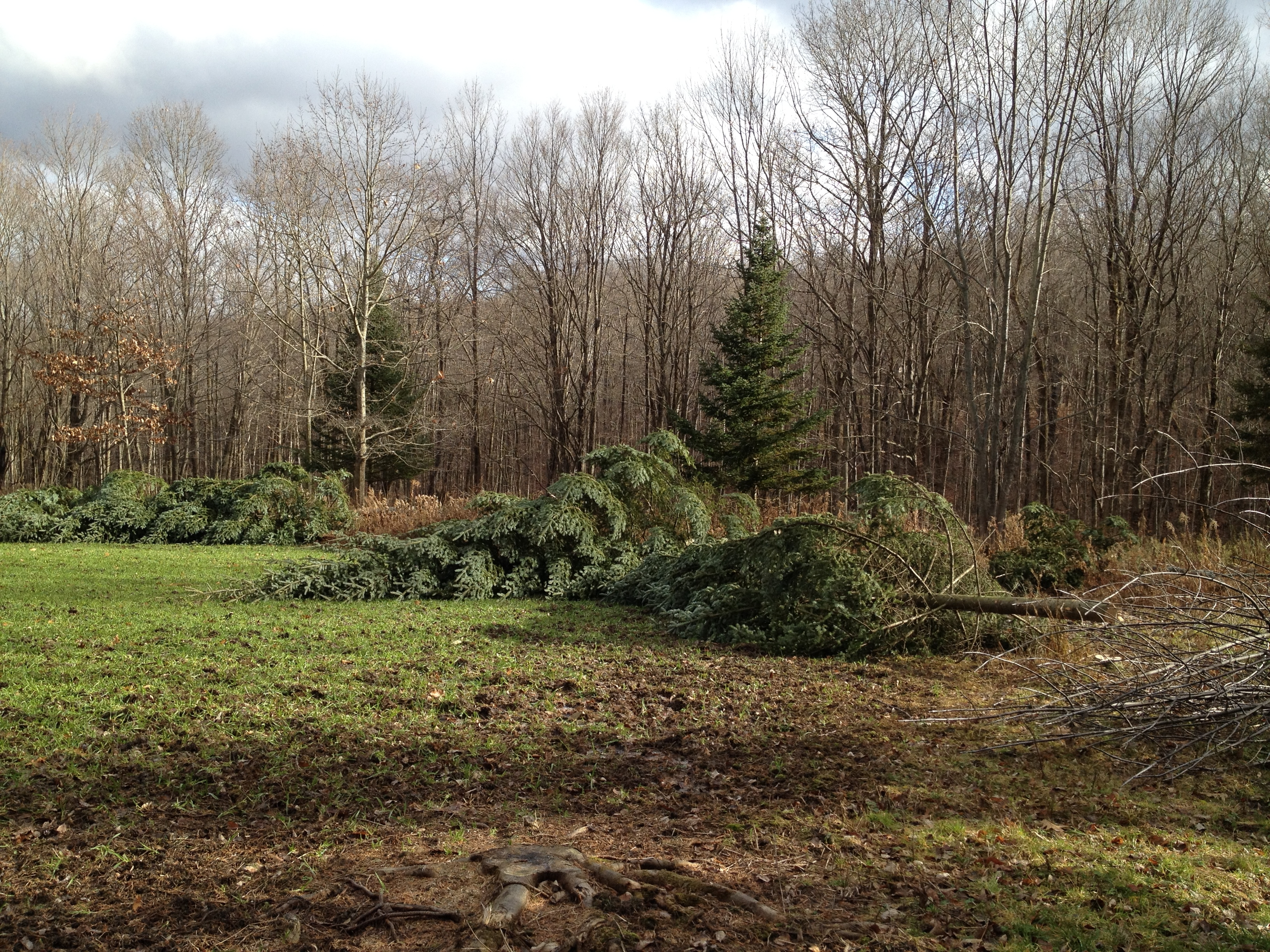 Culling Trees to Add Sunlight