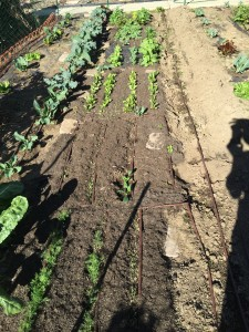 Seedling Blocks with Drip Irrigation