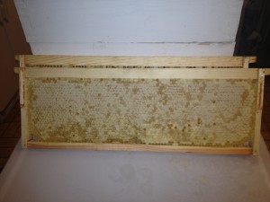 Frames of honey ready to be extracted