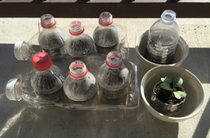 Opening Coke bottle tops for ventilation