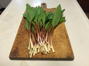 Ramps ready for your favorite recipe or fresh chopped in a sandwich or salad