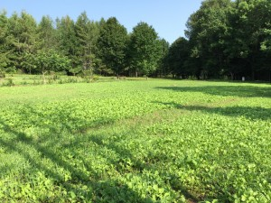 Multiple Food Plots with Multiple Seed Mixes Planted